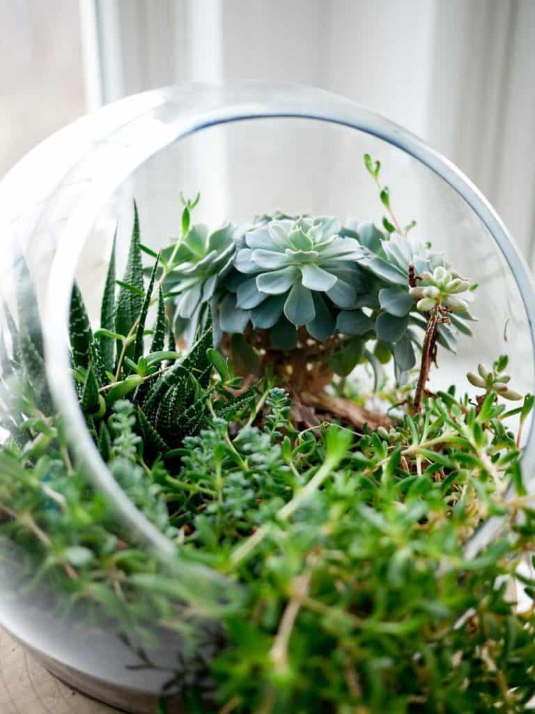 Ogród w szkle z sukulentami
